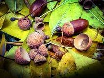 De herfst in liefde Stock Foto's