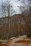 De herfst in Logar-Vallei (Logarska Dolina) Stock Foto's