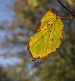 De herfst in Londen, zonnige dag - heldergroen blad en een blauwe hemel royalty-vrije stock afbeeldingen