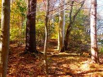 In de herfst lopend weg in Massachusetts Stock Foto's