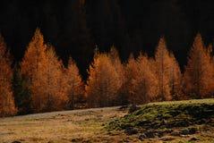 De herfst met in brand gestoken kleuren Stock Fotografie