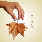 De herfst, met een retro effect Stock Foto