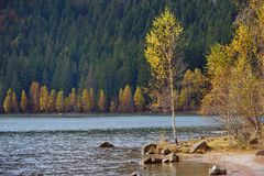 De herfst met het gele gebladerte Royalty-vrije Stock Foto's