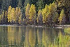 De herfst met het gele gebladerte Stock Foto's