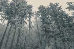 De herfst met mist over de heuvels royalty-vrije stock afbeeldingen