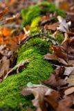 De herfst met mos op een hout en bladeren royalty-vrije stock fotografie