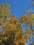 De herfst in Michigan – 04_10_2_001 Royalty-vrije Stock Afbeelding