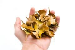 De herfst in mijn handen Royalty-vrije Stock Foto