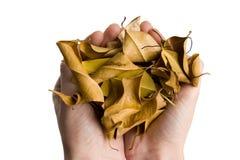 De herfst in mijn handen Stock Foto