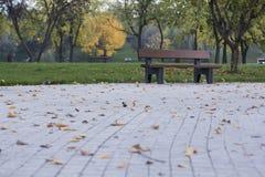 De herfst mistig landschap Stock Foto's