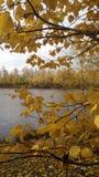 De herfst, mobiele telefoonfoto royalty-vrije stock afbeeldingen
