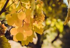 De Herfst in Moldavië Stock Afbeelding