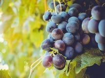De Herfst in Moldavië Royalty-vrije Stock Afbeeldingen