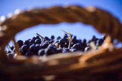 De Herfst in Moldavië Stock Foto's