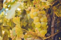De Herfst in Moldavië Royalty-vrije Stock Foto