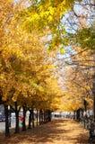 De herfst in Montreal Royalty-vrije Stock Foto's