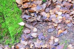 De herfst: mos en vernietigde bladeren Stock Foto