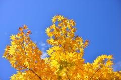 De herfst in MT Wilson NSW, Australië Royalty-vrije Stock Afbeelding