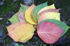 De herfst Multicolored bladeren op de steen Stock Foto's