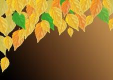 De herfst multicolored bladeren op een donkere achtergrond Stock Foto