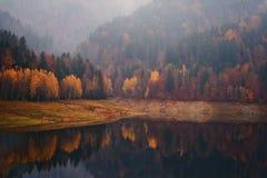 De herfst myst stock afbeeldingen