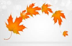 De herfst naadloos patroon Stock Afbeeldingen