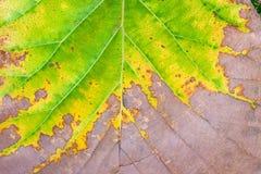 De herfst naadloos patroon Royalty-vrije Stock Foto's