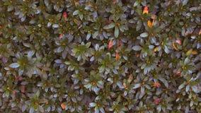 De herfst naadloos patroon Royalty-vrije Stock Afbeelding