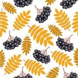 De herfst naadloos patroon met lijsterbes Stock Afbeeldingen
