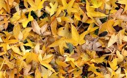 De herfst (Naadloze) Groundcovering Stock Foto's