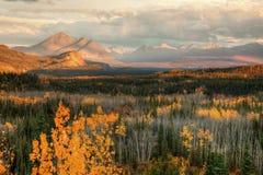 De herfst in nationaal Park Denali bij zonsondergang stock foto's