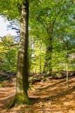De herfst in Nationaal Park Nederland stock foto's