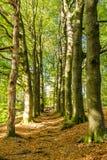 De herfst in Nationaal Park Nederland royalty-vrije stock fotografie