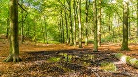 De herfst in Nationaal Park Nederland stock foto