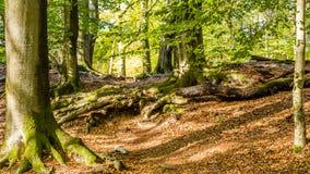 De herfst in Nationaal Park Nederland stock fotografie