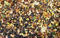 De herfst natte bladeren Stock Foto's