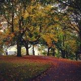 De herfst in Nederland Stock Foto