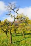 De herfst no.7 Royalty-vrije Stock Foto