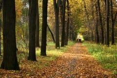 De herfst in ons park. Stock Afbeeldingen