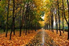De herfst in ons park. Stock Foto
