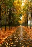 De herfst in ons park. Stock Fotografie