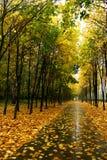 De herfst in ons park. Royalty-vrije Stock Foto's