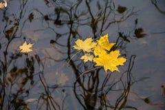 de herfst, ontbladering Stock Afbeeldingen