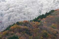 De herfst ontmoet de Winter Stock Afbeelding