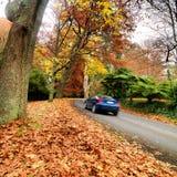 De herfst op de landweg Stock Afbeeldingen