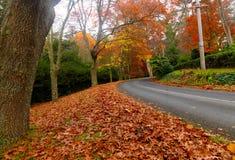 De herfst op de landweg Stock Foto's