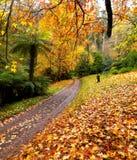 De herfst op de landweg Royalty-vrije Stock Foto