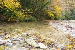 De herfst op de Rivier Stock Foto's