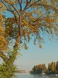 De herfst op de rivier Donau Stock Fotografie