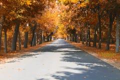 De herfst op de weg Royalty-vrije Stock Foto's